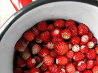 A cup of wild strawberries from the Zagori region in Pindus