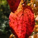 Autumn foliage colours. Northern Greece