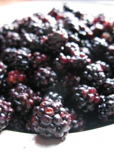 Blackberries or Rubus is a large genus of flowering plants in the rose family, Rosaceae, subfamily Rosoideae. Raspberries, blackberries, and dewberries are common