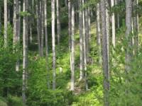 National Park of Pindus, Valia Calda