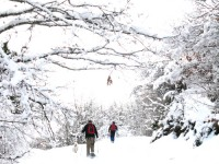 Snowshoeing in the forest. National Park of Vikos-Aoos in the mountains Northern Greece