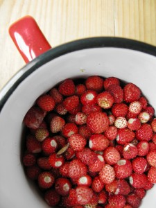 Wild strawberries, collected late in spring at the mountains of Pindus Greece