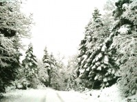 Snow white road with fir trees during Xmas 2013 in the Zagori region of Greece