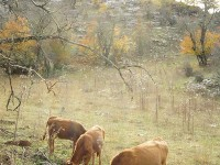 Uncontrolled and extensive grazing during the summer months in Pindos Ecoregion