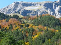 A mixed broadleaf forest in Central Zagori close to the villages of Brysochori and Heliochori. Broadleaf forests dominate the valleys and canyons of the middle and lower elevations in Pindus Ecoregion in Greece