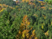 A mixed broadleaf forest (the yellow colour is from the beech trees in the area) close to the villages of Brysochori and Heliochori in Central Zagori, Greece