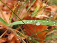 Rain drops on a grass among fallen autumn leaves. Experience fall in Greece