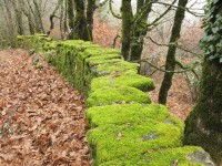 An old stone wall almost buried under a carpet of oak leaves. Zagorochoria region, Epirus