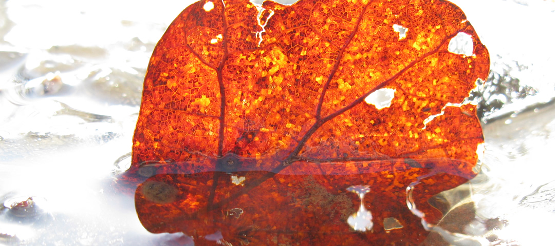 A leaf in a frozen creek in Zagorochoria region, Greece