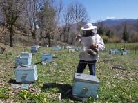 Smoking the beehives in Zagori, Greece