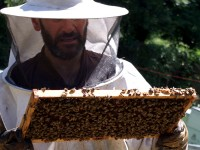 Inspection of the Queen exluder in a beehive | Zagori, Greece