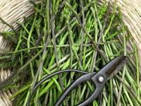 A basket full of wild asparagus. Zagorochoria region, National Park of Pindus, Greece
