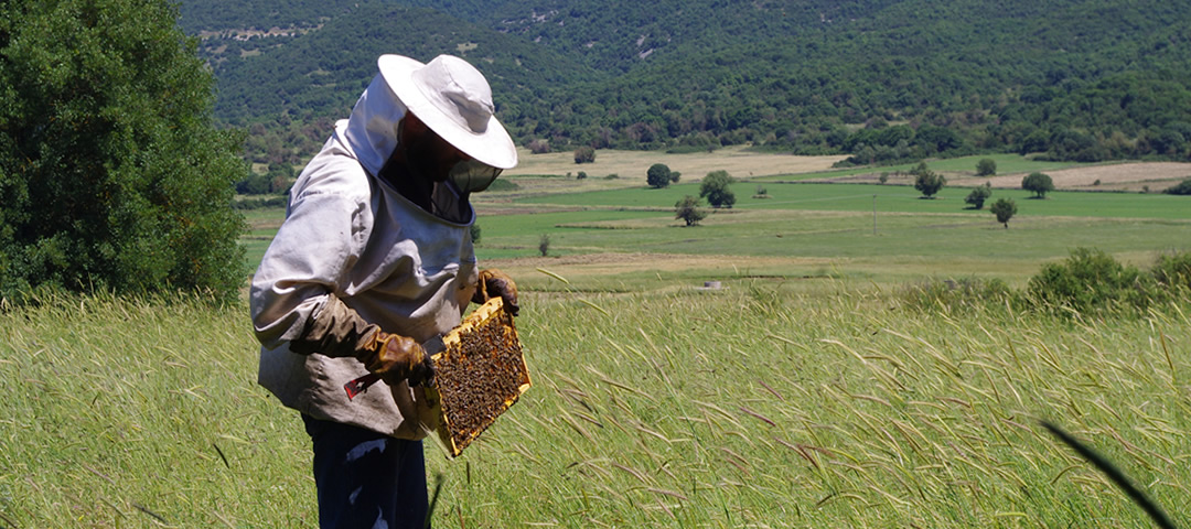 Bee keeping lessons in Greece