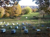 The beehives at 900 metres altitude in the National Park of Pindus
