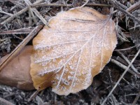 Early morning frost on the ground in Orliakas mountain, Grevena, Greece