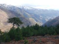 Pine trees and mountain peaks in Valia Kalda, Grevena, Greece