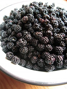 Bowl of freshly picked blackberries from the forests of Zagori in Pindus mountain range