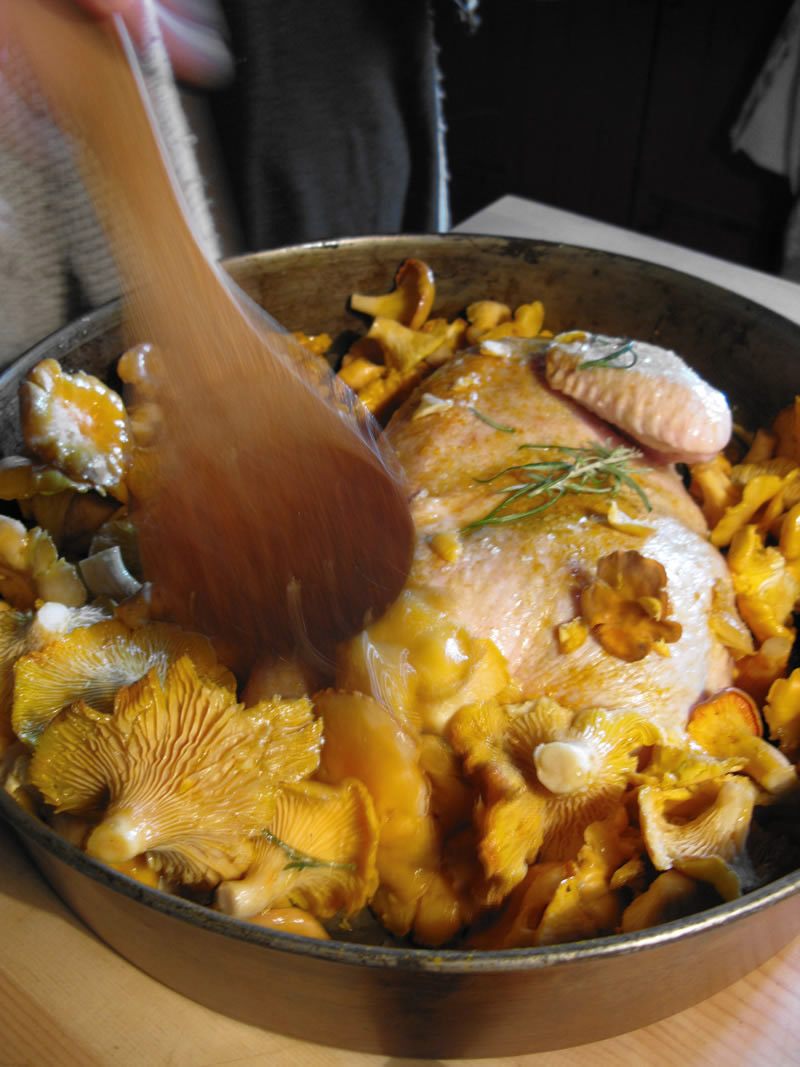 Cooking chicken and chanterelles right from the Autumnn forests of the Zagori region