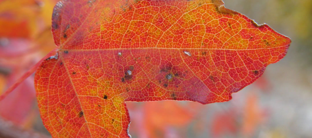 Autumn in Zagori Greece