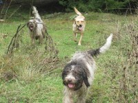 Sissy, Irma and Ares in duty in search of the truffles of Zagori