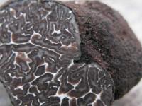 Tuber brumale truffle national park of Vikos-Aoos