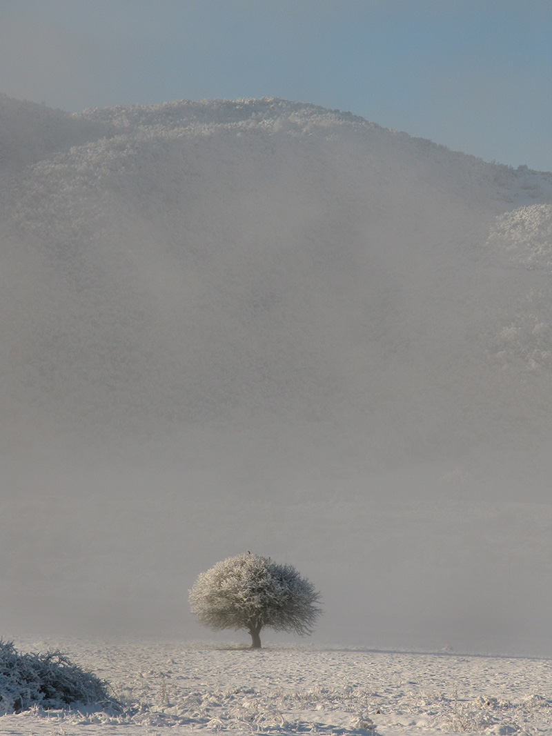 A lonely tree in the plain of Soudena below Elafotopos and Ano Pedina villages