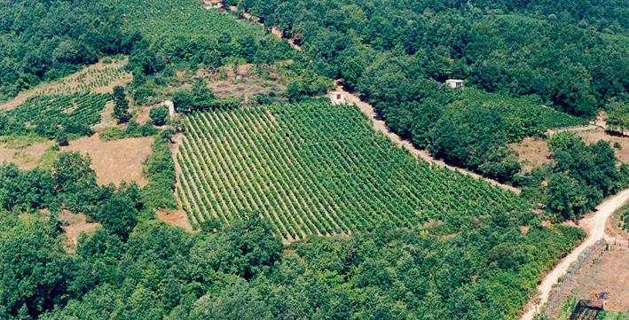 Zoinos Winery Zitsa, Ioannina, Greece
