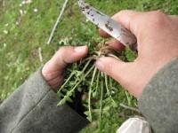 Wild herbs in Epirus,. Greece