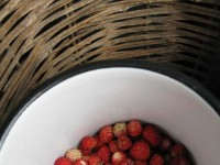 Picking wild strawberries from the forests of Zagori