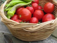 Home cultivated organic vegetables in the Zagori region