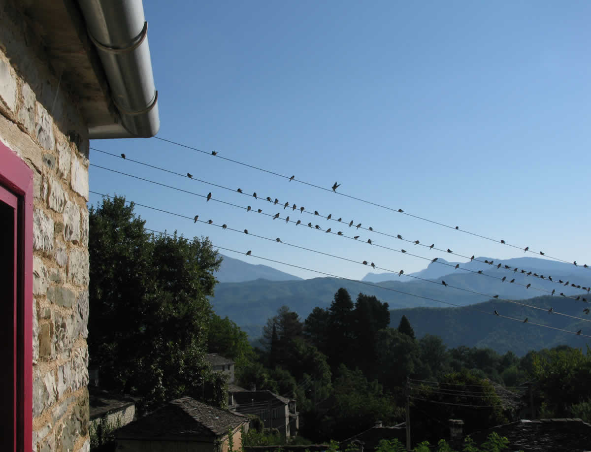 The swallows gathered this morning outside my window in Zagori in anticipation of their southbound trip towards their warmer second home