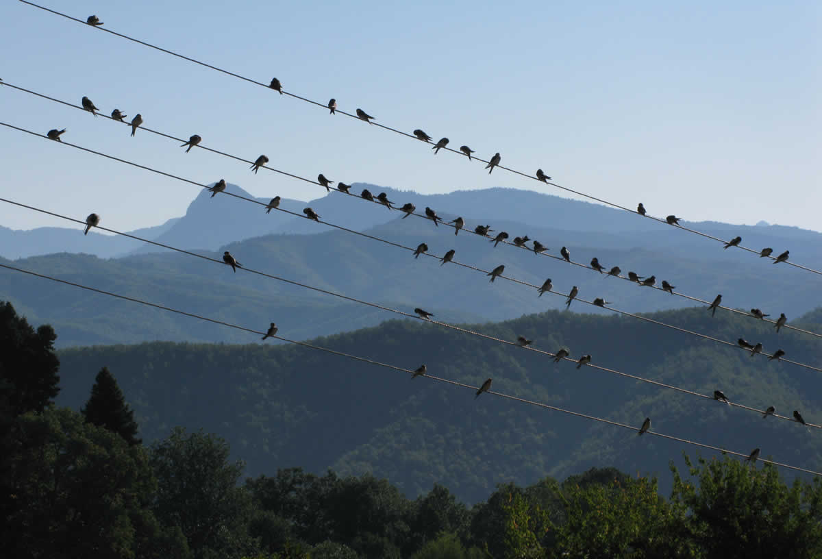 Swallows sitting on the wires in Zagorohoria, Greece