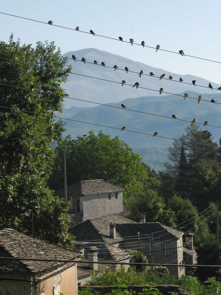 Autumn is closing in as the swallows indicate in Zagorochoria, Ioannina