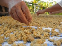 laying the pieces on a the table cloth under the sunlight | making trahana in zagori