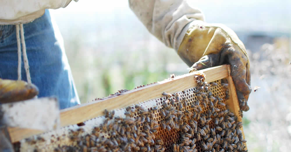 The beekeeping seminars take place at the workshop of Moses in Tsepelovo village at almost 1.200m in altitude, at a panoramic location on the mountain range of Tymfi surrounded by the high peaks of Pindus range in the Zagorohoria, Epirus