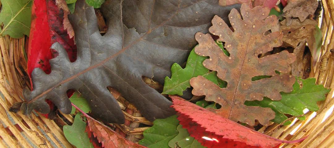Autumn colours in Zagori
