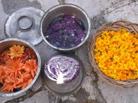 Rokka, agrotourism in the Zagori. Making colours from natural sources for the dying of wool