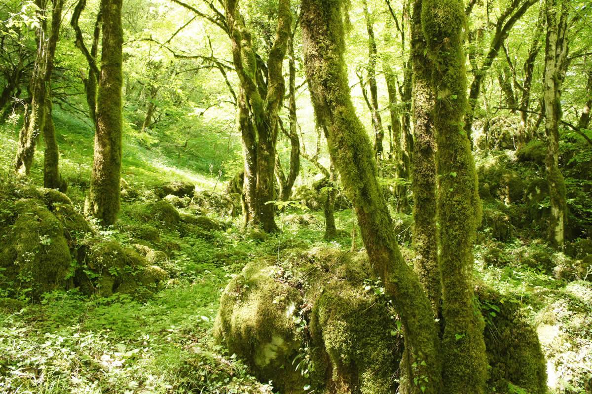 "An ""exotic"" corner long the trek in Vikos canyon"