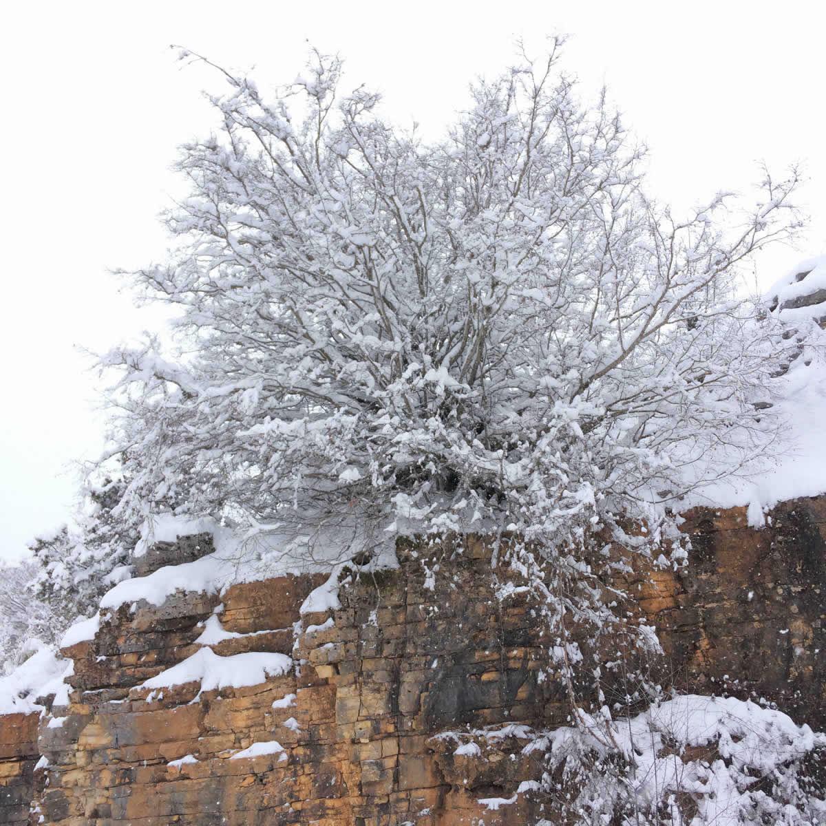 Winter scenery close to Kipoi Village in Zagori