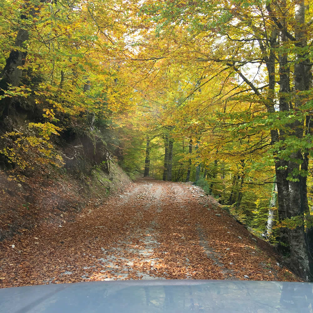 An Autumn trip to the colourful beech trees under Tsouka Rossa mountain peak in Pindus